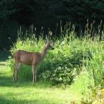 Sixty Plus Datebook: a deer friend